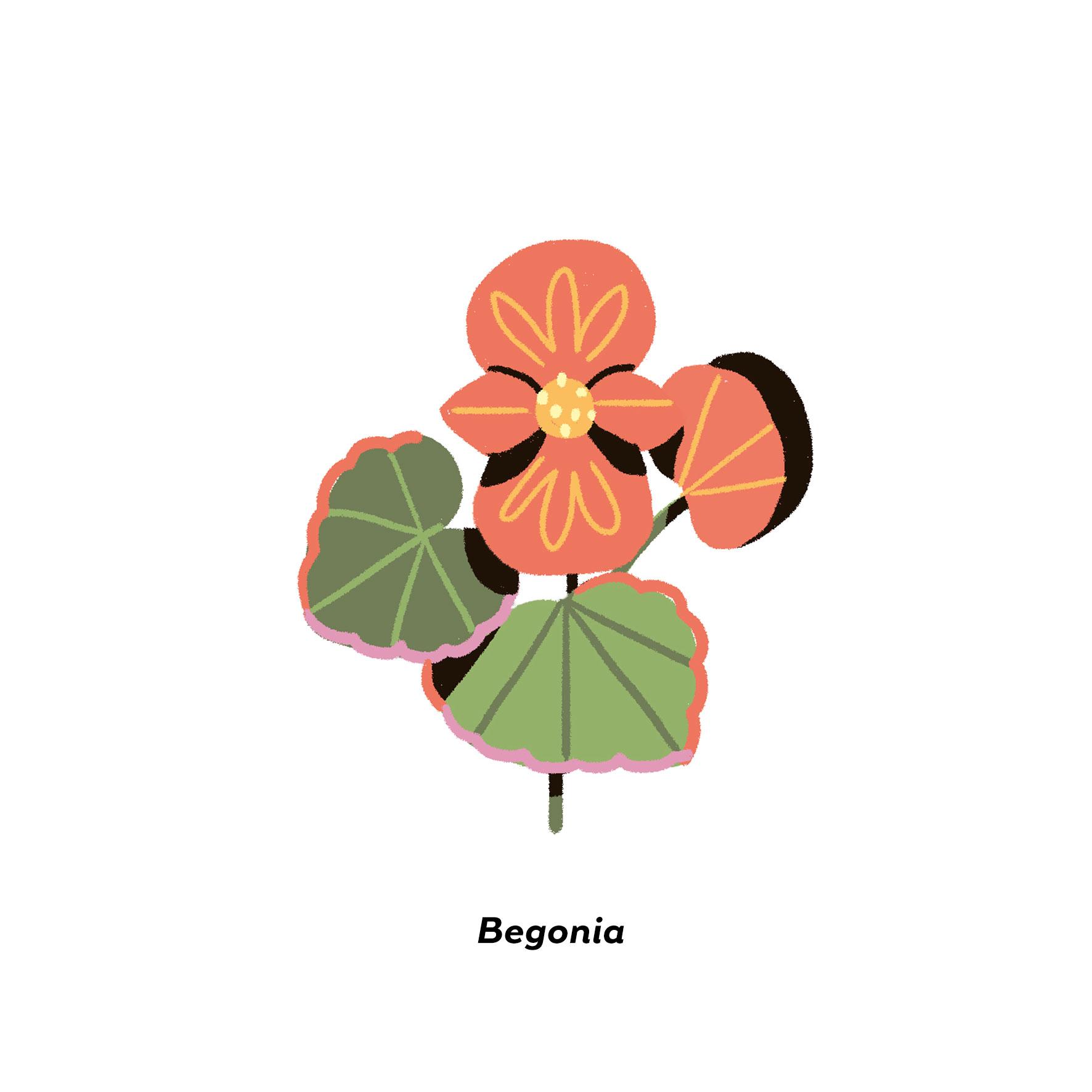 MartaSIgnori_Begonia