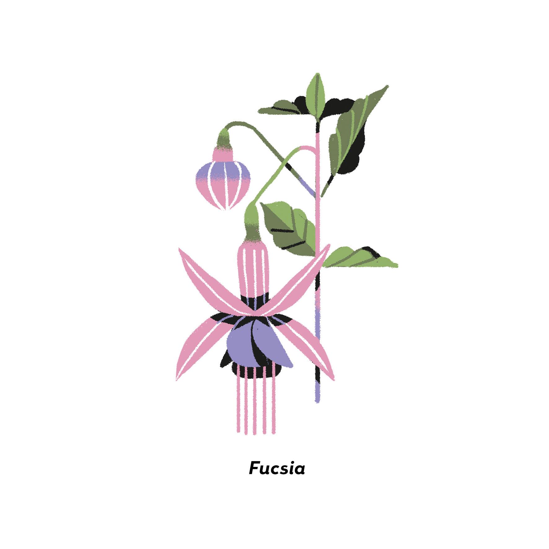 MartaSIgnori_Fucsia
