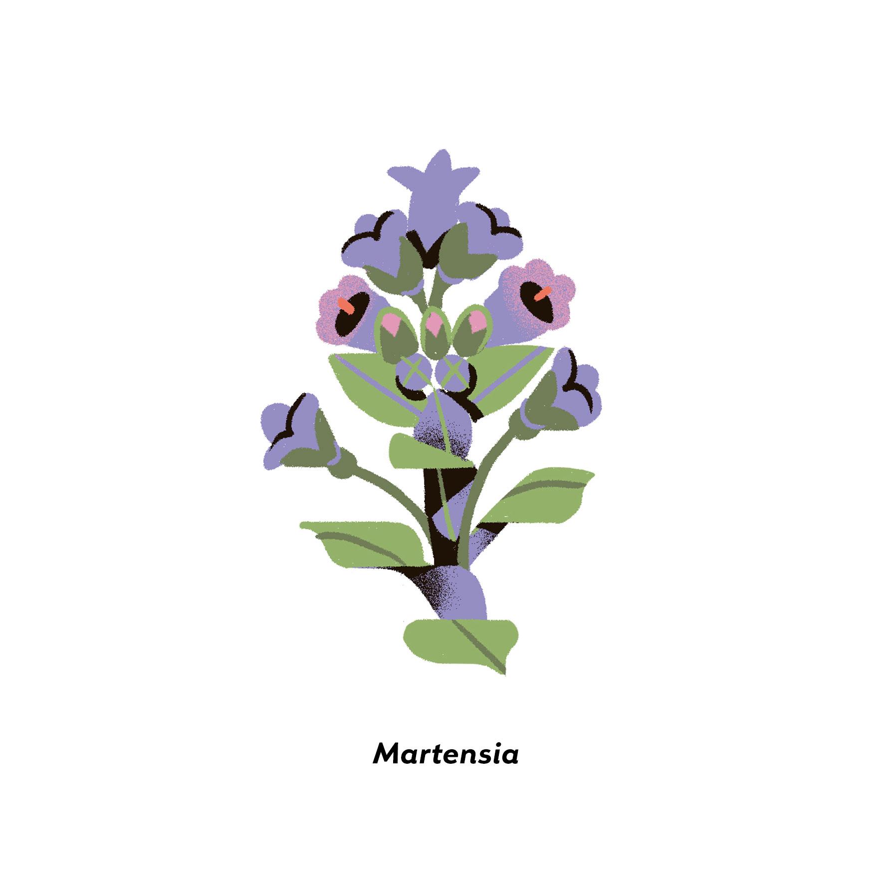 MartaSIgnori_Martensia