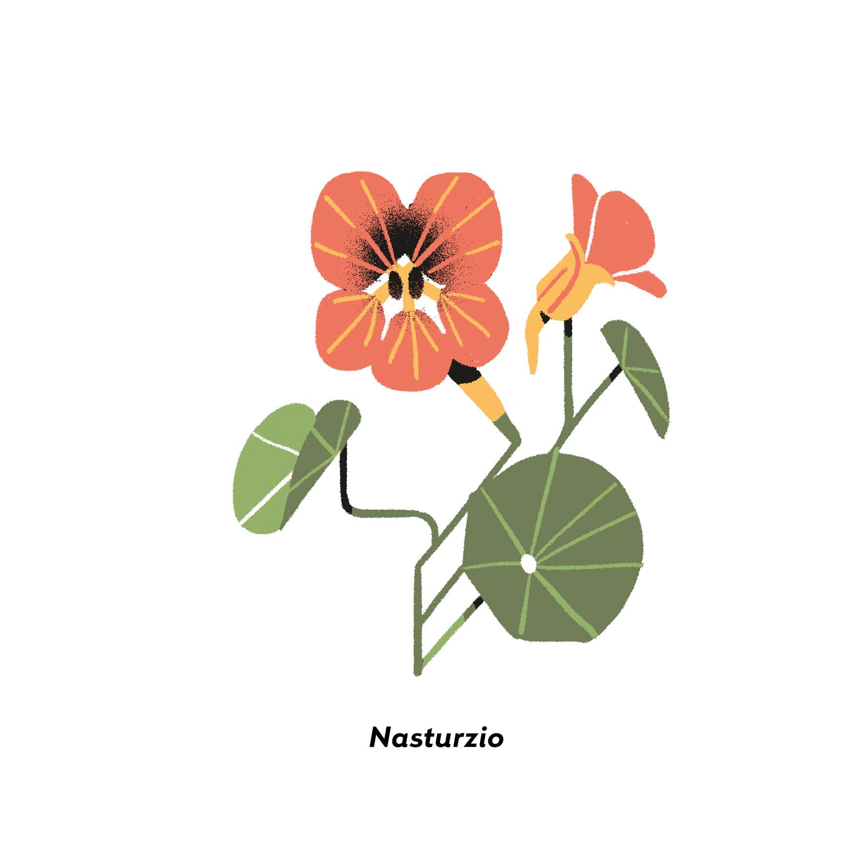 MartaSIgnori_Nasturzio